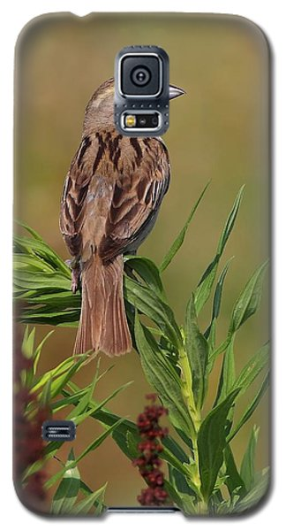 Galaxy S5 Case featuring the photograph Female Dickcissel by Daniel Behm