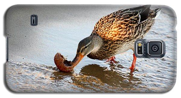 Female Mallard Duck  Galaxy S5 Case