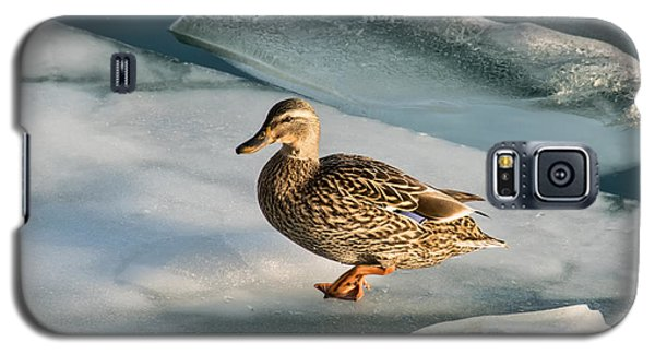 Female Mallard In A Cold World Galaxy S5 Case by Gerda Grice