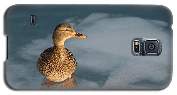 Female Mallard In Icy Water Galaxy S5 Case by Gerda Grice