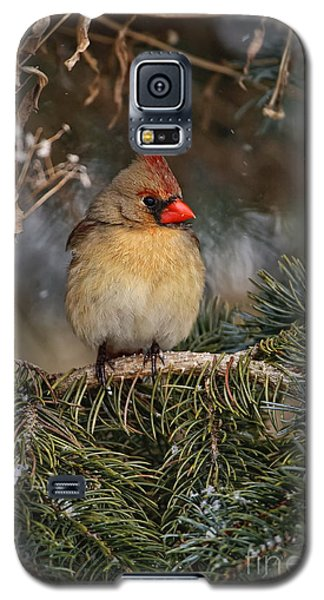 Female Norther Cardinal Galaxy S5 Case