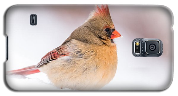 Female Northern Cardinal Galaxy S5 Case