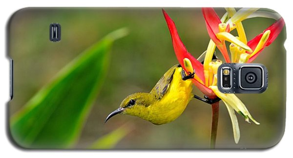 Female Olive Backed Sunbird Clings To Heliconia Plant Flower Singapore Galaxy S5 Case