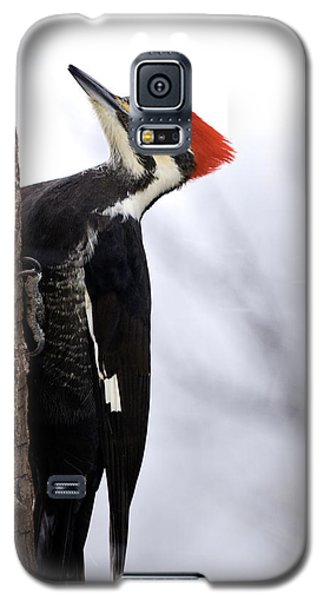 Female Pileated Woodpecker 2 Galaxy S5 Case