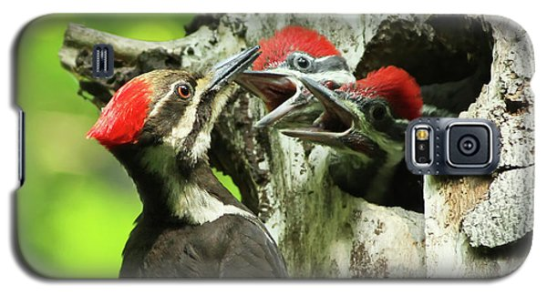 Female Pileated Woodpecker At Nest Galaxy S5 Case by Mircea Costina Photography