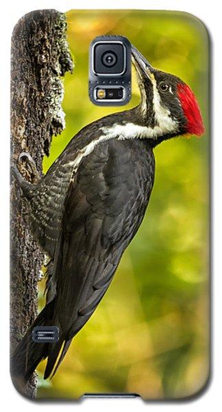 Female Pileated Woodpecker No. 2 Galaxy S5 Case by Belinda Greb