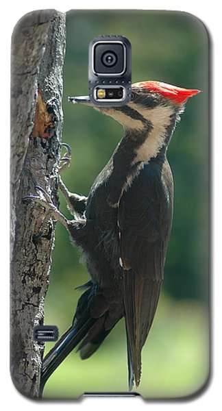 Galaxy S5 Case featuring the photograph Female Pileated Woodpecker by Sandra Updyke