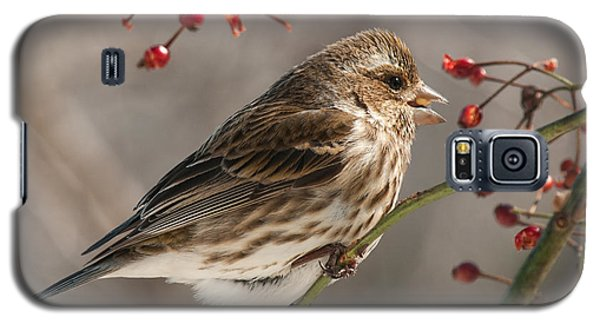 Galaxy S5 Case featuring the photograph Female Purple Finch On Berries by Lara Ellis