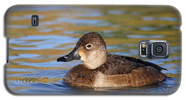 Galaxy S5 Case featuring the photograph Female Ringneck by Ruth Jolly