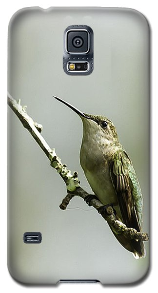 Female Ruby-throated Hummingbird 1 Galaxy S5 Case