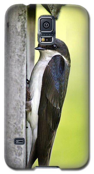 Tree Swallow On Nestbox Galaxy S5 Case by Christina Rollo