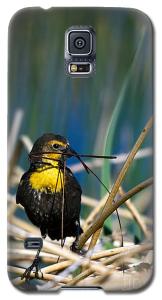 Blackbird Builds A Nest Galaxy S5 Case
