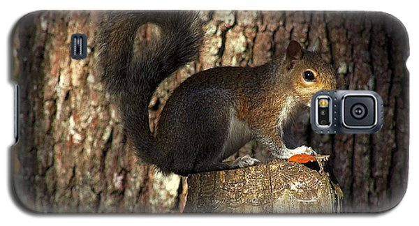 Galaxy S5 Case featuring the photograph Fence Post Squirrel  by Chris Mercer