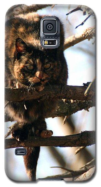 Feral Cat In Pine Tree Galaxy S5 Case