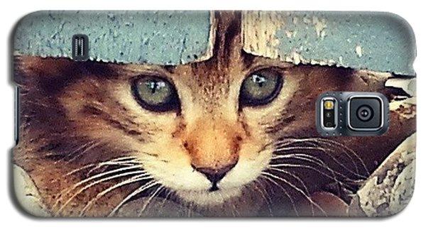 Animal Galaxy S5 Case - Peek A Boo Kitten by Mark Kiver