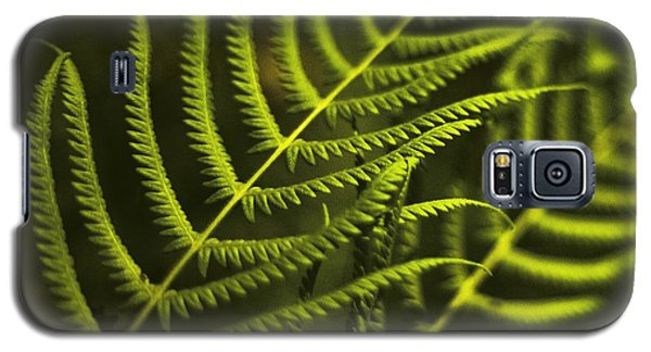 Galaxy S5 Case featuring the photograph Fern by Bradley R Youngberg