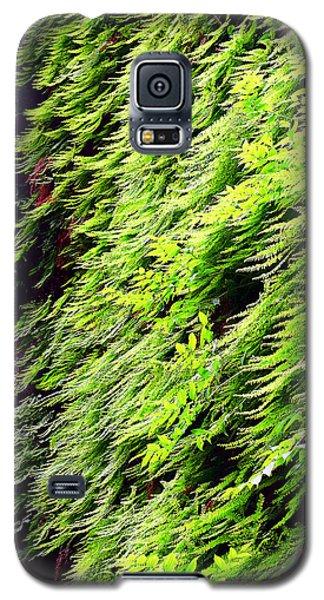 Fern Canyon Galaxy S5 Case