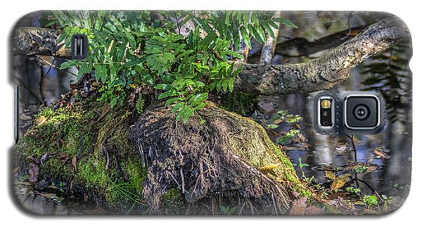 Fern In The Swamp Galaxy S5 Case by Jane Luxton