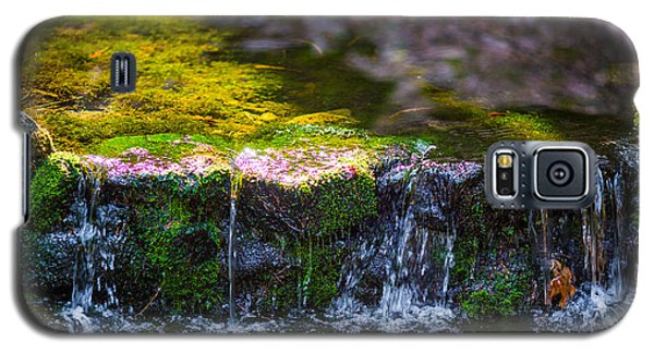 Galaxy S5 Case featuring the photograph Fern Spring by Mike Lee