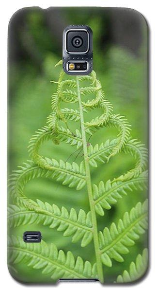 Fern Galaxy S5 Case by Tiffany Erdman
