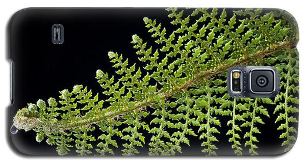 Fern With Raindrop 2 Galaxy S5 Case
