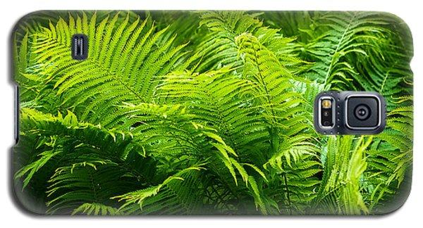 Ferns 1 Galaxy S5 Case by Alexander Senin