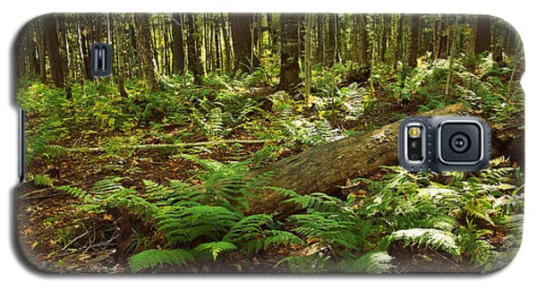 Ferns In The Woods Galaxy S5 Case