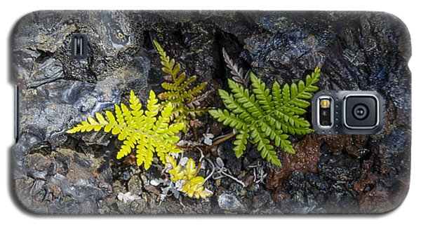 Ferns In Volcanic Rock Galaxy S5 Case