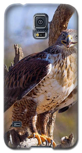 Ferruginous Hawk Galaxy S5 Case