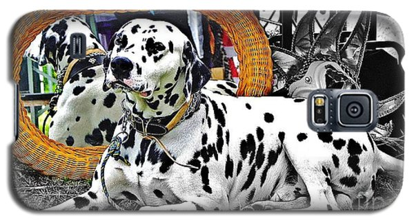 Festival Dog Galaxy S5 Case by Blair Stuart