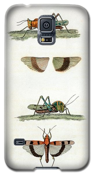 Field Crickets Galaxy S5 Case by General Research Division/new York Public Library