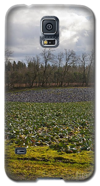 Field Of Color 2 Galaxy S5 Case by Belinda Greb
