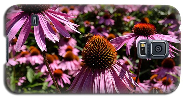 Field Of Echinaceas Galaxy S5 Case