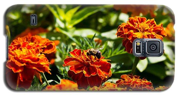 Field Of Marigolds Galaxy S5 Case