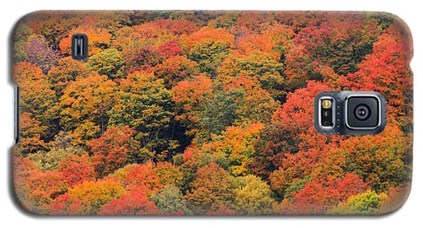 Field Of Trees From Above During Fall Foliage. Galaxy S5 Case