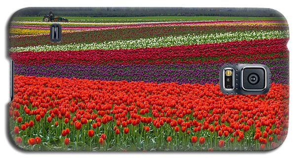 Field Of Tulips Galaxy S5 Case
