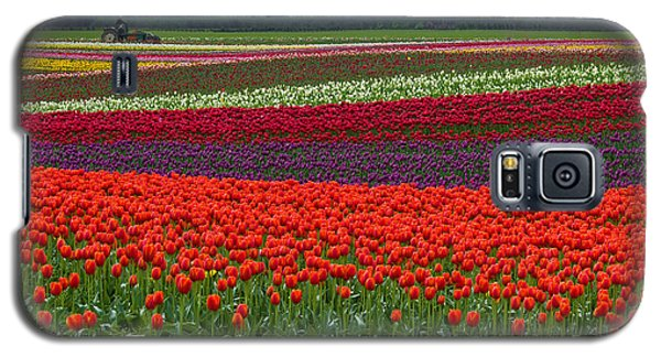 Field Of Tulips Galaxy S5 Case