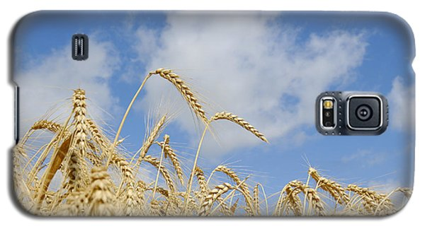 Field Of Wheat Galaxy S5 Case by Charles Beeler