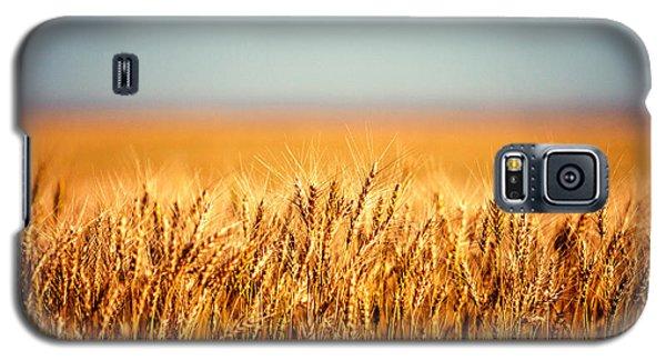 Field Of Wheat Galaxy S5 Case