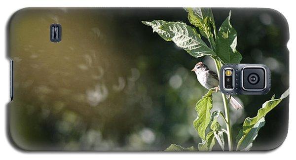 Field Sparrow Galaxy S5 Case by Melinda Fawver