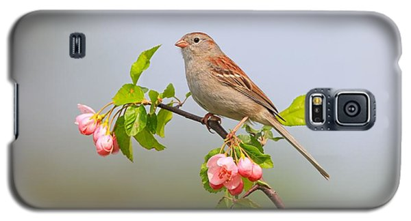 Galaxy S5 Case featuring the photograph Field Sparrow On Apple Blossoms by Daniel Behm