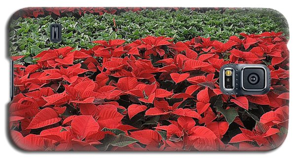 Galaxy S5 Case featuring the photograph Fields Of Poinsettias by Peggy Stokes