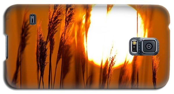 Fiery Grasses Galaxy S5 Case