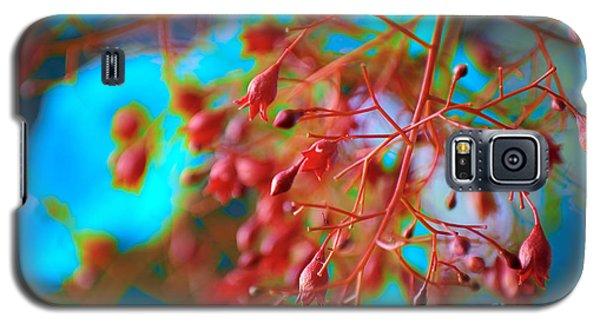 Fiery Red Clusters - Illawarra Flame Tree Galaxy S5 Case by Kerryn Madsen-Pietsch