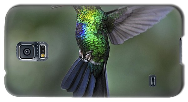 Fiery-throated Hummingbird..  Galaxy S5 Case by Nina Stavlund