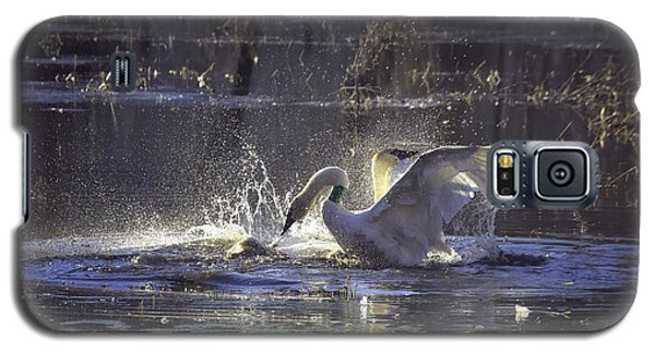Fighting Swans Boxley Mill Pond Galaxy S5 Case by Michael Dougherty