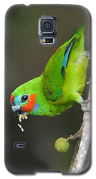 Figparrot Eating Figs Galaxy S5 Case