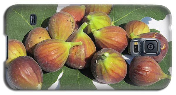 Galaxy S5 Case featuring the photograph Figs First Harvest 2012 by Tina M Wenger