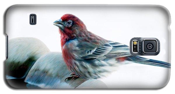 Finch Galaxy S5 Case by Ann Lauwers