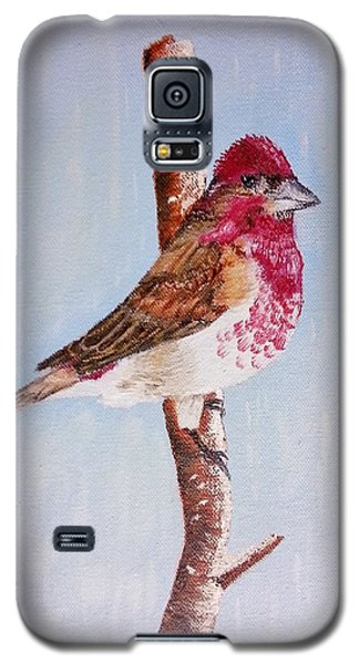 Finch Galaxy S5 Case by Valorie Cross